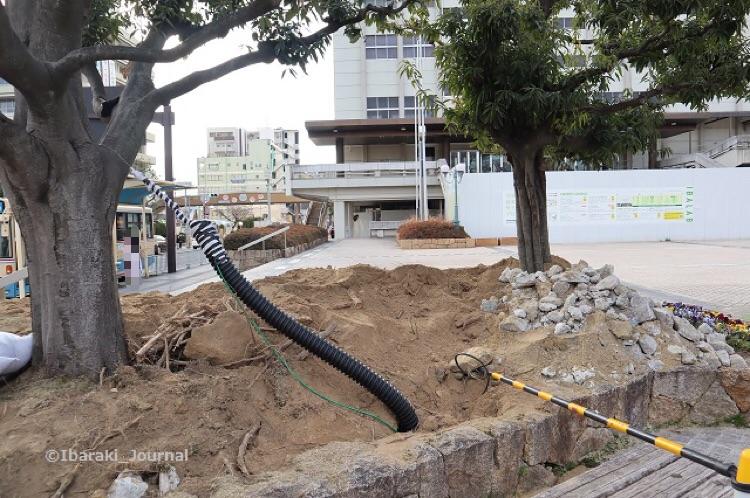 市民会館前植木のあたりIMG_8237