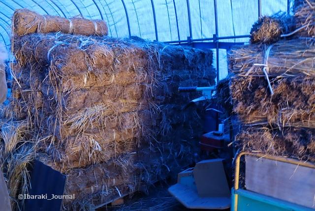 三島独活の小屋の中に藁IMG_8932