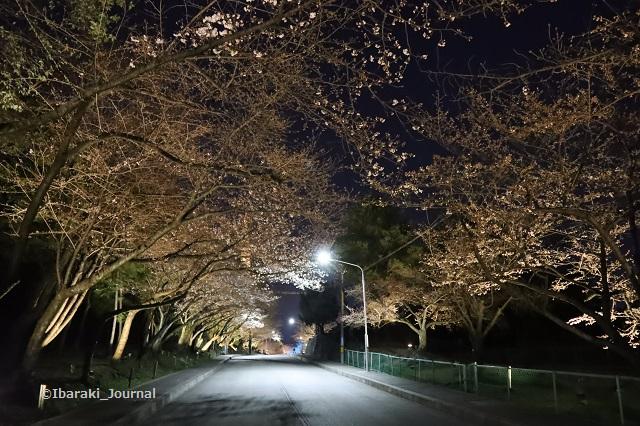 辯天さん坂道の桜IMG_9050