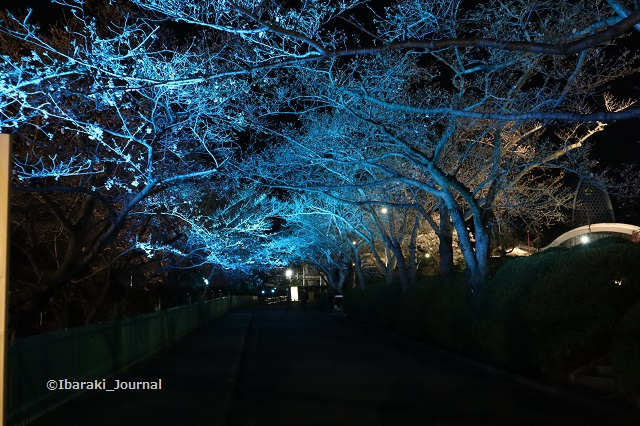 辯天桜の通り道青色IMG_9059