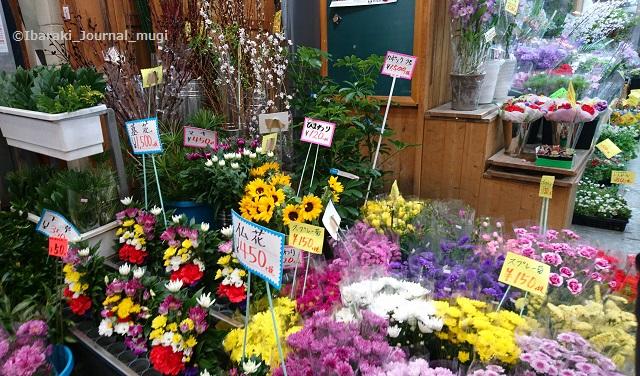 茨木園芸の花