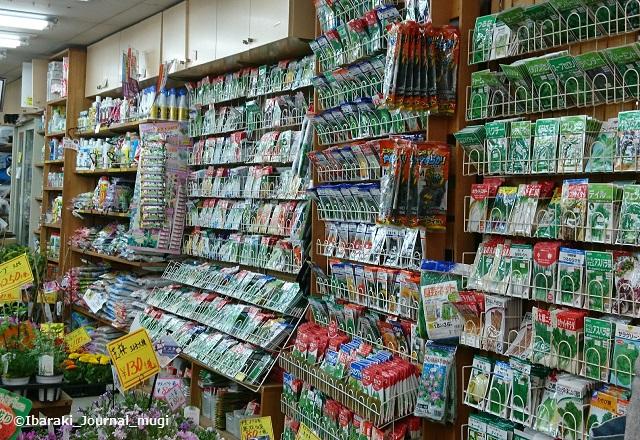 茨木園芸の種販売