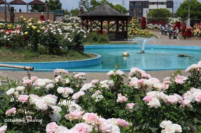 バラ園噴水のほうIMG_9718