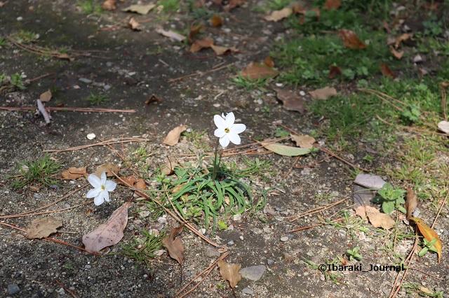 溝咋神社の花IMG_9459