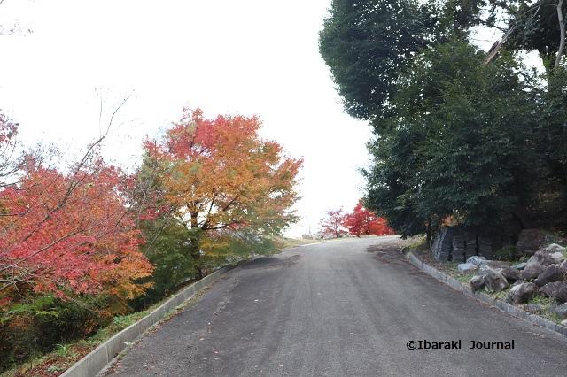 大門寺の紅葉の道IMG_1245