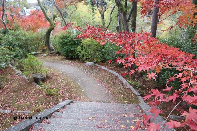 大門寺門から紅葉を見る2IMG_1308