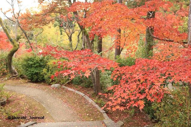 大門寺門から紅葉を見るIMG_1271