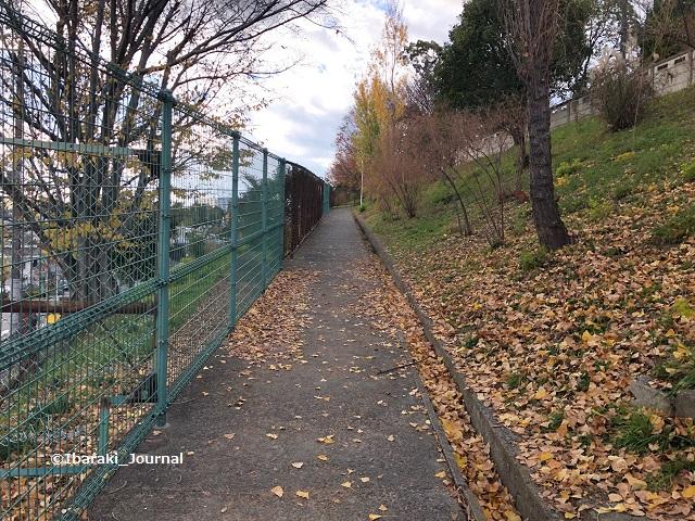山手台中央公園の歩道IMG_0711