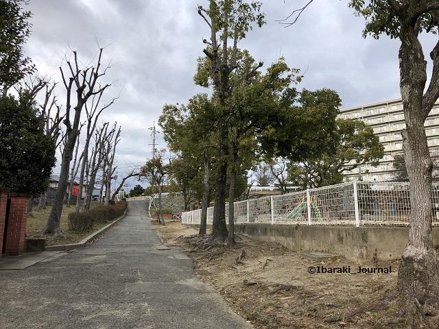 20200118三島公園西側坂道IMG_1515