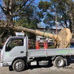 茨木神社で木を伐採Image-10128