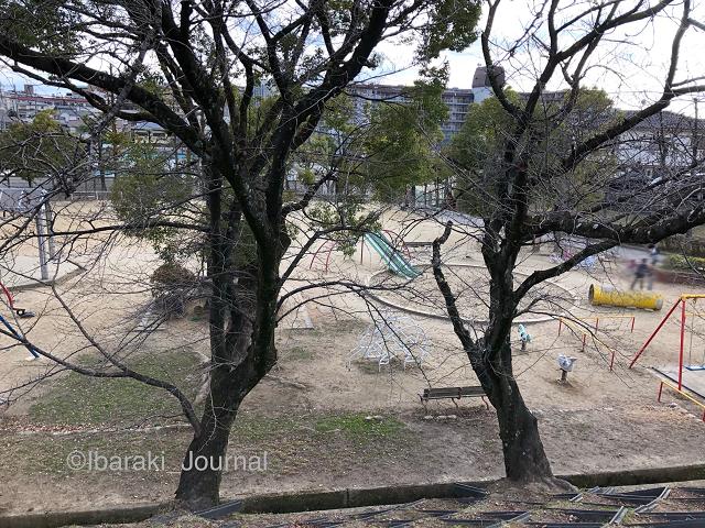三島公園上からIMG_1559