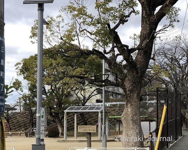 20200118三島公園IMG_1498