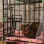 猫IMG_1761