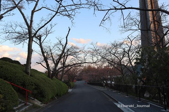 弁天さん坂道2-20200323IMG_2277
