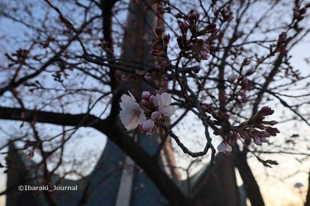 弁天さん塔の近くの桜20200323IMG_2278