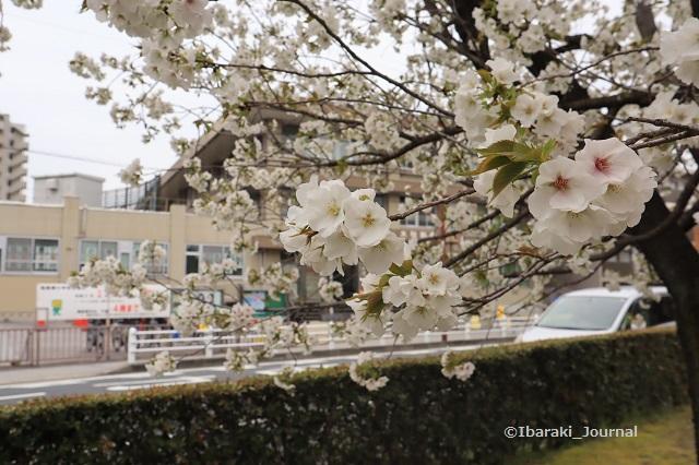 0330税務署を元茨木川緑地からIMG_2309