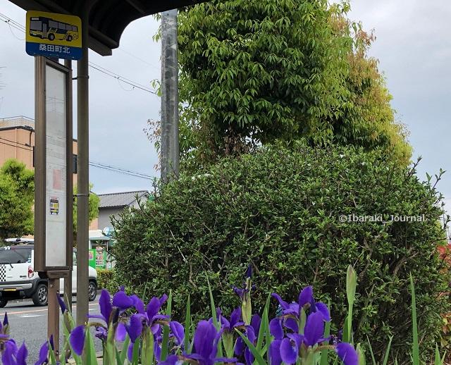 2桑田町北バス停IMG_3620
