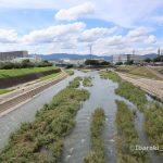 0716安威川と茨木川合流するところIMG_3812
