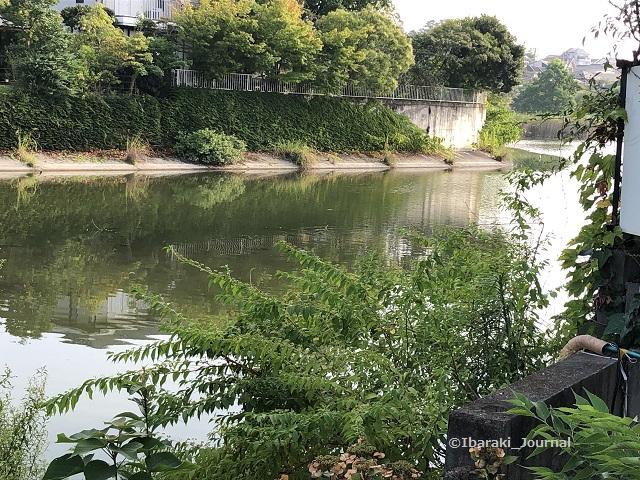 0820松沢池公園から池を見るIMG_5985