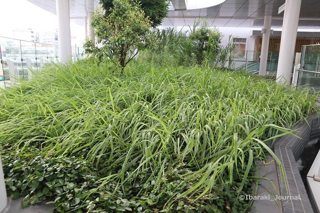 0719茨木スカイパレット奥の植栽の様子3IMG_3822