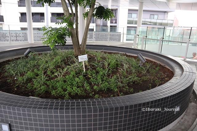 0719JR茨木スカイパレット木のそばの草ほかのところIMG_3820
