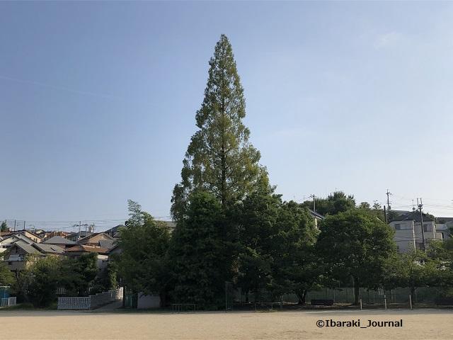 0820-7春日丘公園の木IMG_5992