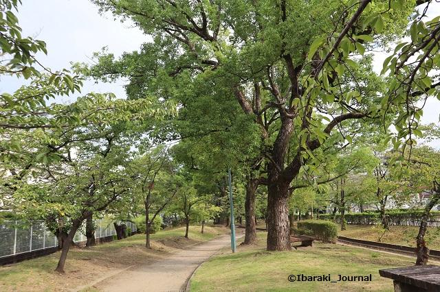 0909-1川端通り沿い元茨木川緑地IMG_4214