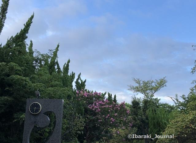 0911桜通り沿い元茨木川緑地時計のあるところIMG_6353