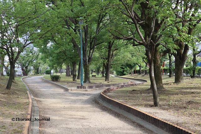 0909-3川端通り沿い元茨木川緑地2IMG_4217