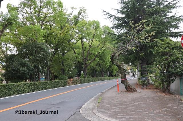 0917川端通りの木5IMG_4528