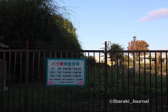 0928若園公園バラ園開園時間IMG_4907