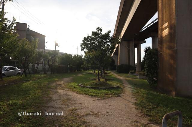0930-5南茨木緑地のさらに東のほうIMG_4958