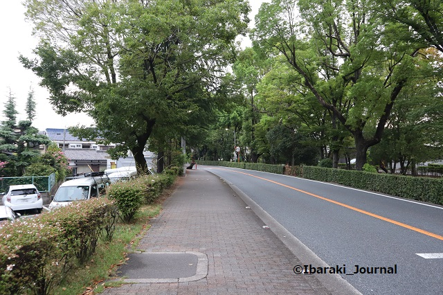 0917川端通りの木2IMG_4526