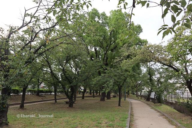 0909-7川端通り沿い元茨木川緑地IMG_4222