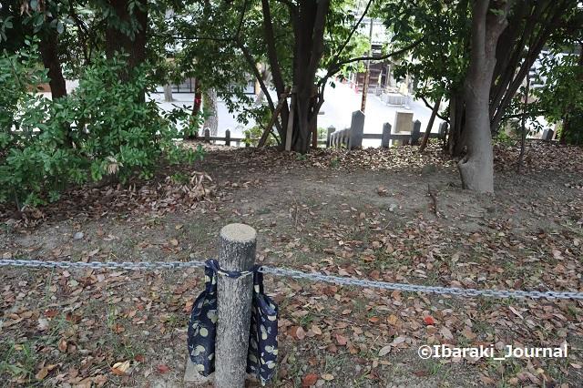 14-1016元茨木川緑地の落とし物IMG_5459