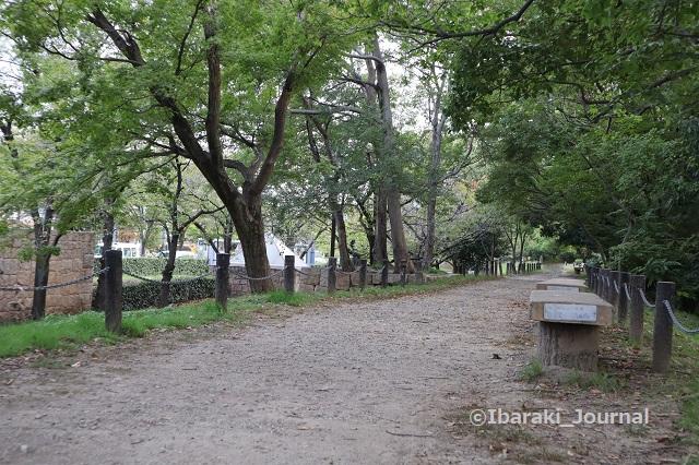 3ー1016元茨木川緑地の上の道歩くIMG_5438