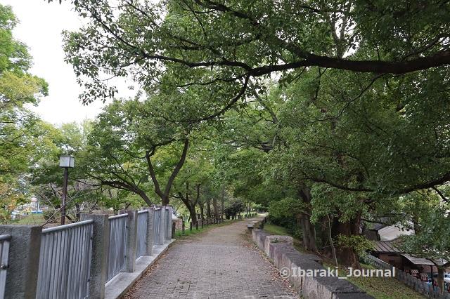 1-1016元茨木川緑地の上側の道IMG_5435