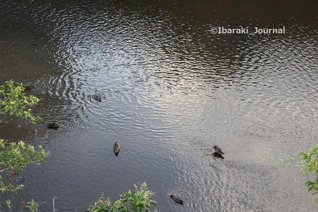 1013-10宇野辺川沿いの道から大正川を見るIMG_5327