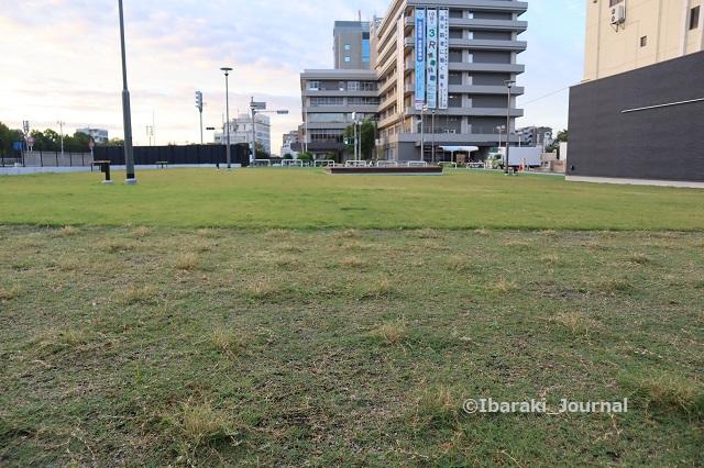 1007芝生広場奥側の芝生IMG_5132