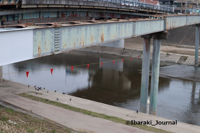3-1022千歳橋の下にはとIMG_5760