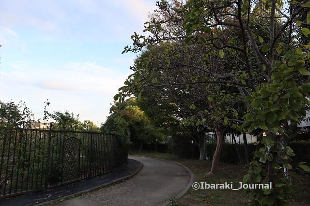 1030バラ園周りの遊歩道1IMG_6013