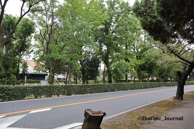 1005川端通り向こうに元茨木川緑地IMG_5039
