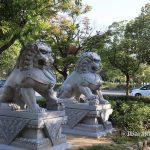 1025沢良宜のライオン3IMG_5931