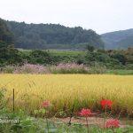 1004見山地区の風景IMG_5011