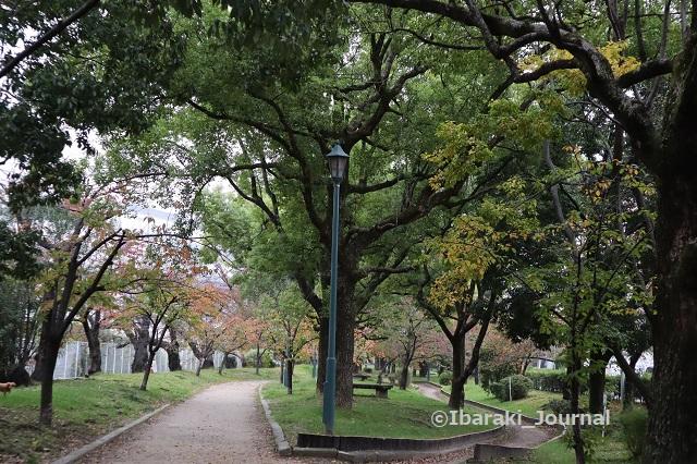 1107元茨木川緑地風景IMG_6418