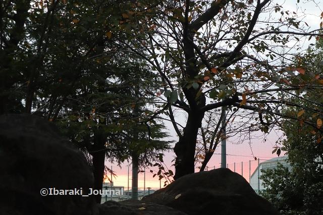 1125-2茨木高校のほうの朝日IMG_6961