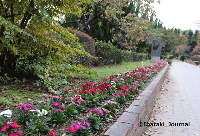 1106元茨木川緑地花壇のところ1IMG_6405