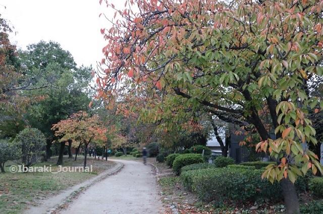 1106元茨木川緑地1ジョギングIMG_6409