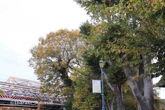 1127川端通り元茨木川緑地JR高架のそばIMG_7084