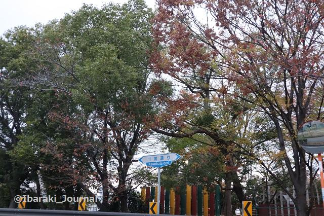 1127川端通りの公園のほう1IMG_7049